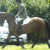 Irish Sport Horse - Image 1