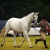 Experienced Dutch Warm blood Mare - Image 4