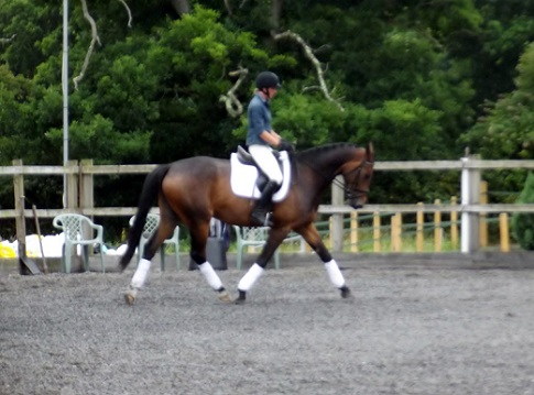 Talented Young Dressage Horse