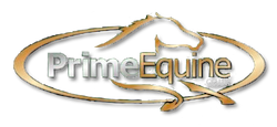 Prime Equine | Horses for sale